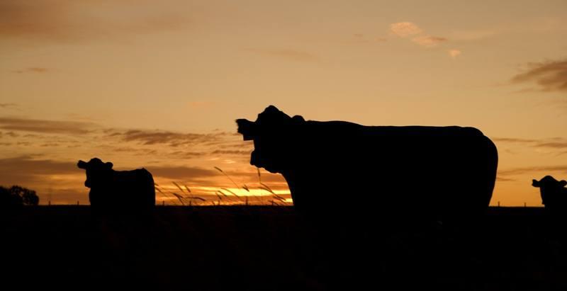 Wzmacnianie zdolności hodowców bydła mlecznego z północnej Mołdawii
